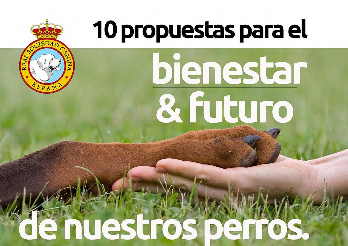 10 Propuestas para el Bienestar & Futuro de nuestros perros